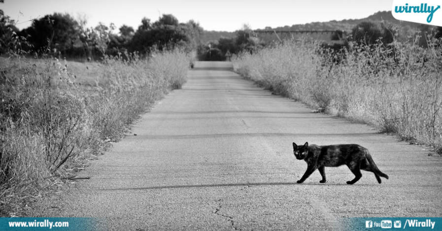 Cats Crossing Your Path
