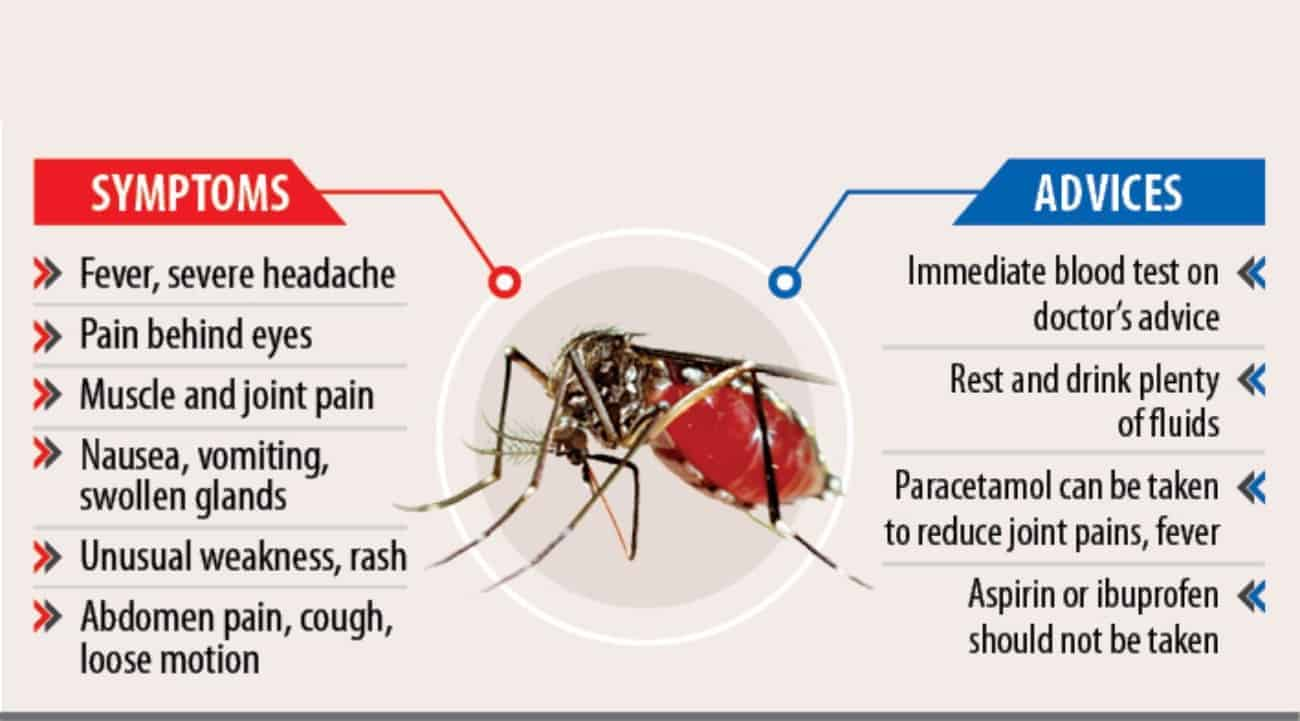 symptoms and advices for dengue