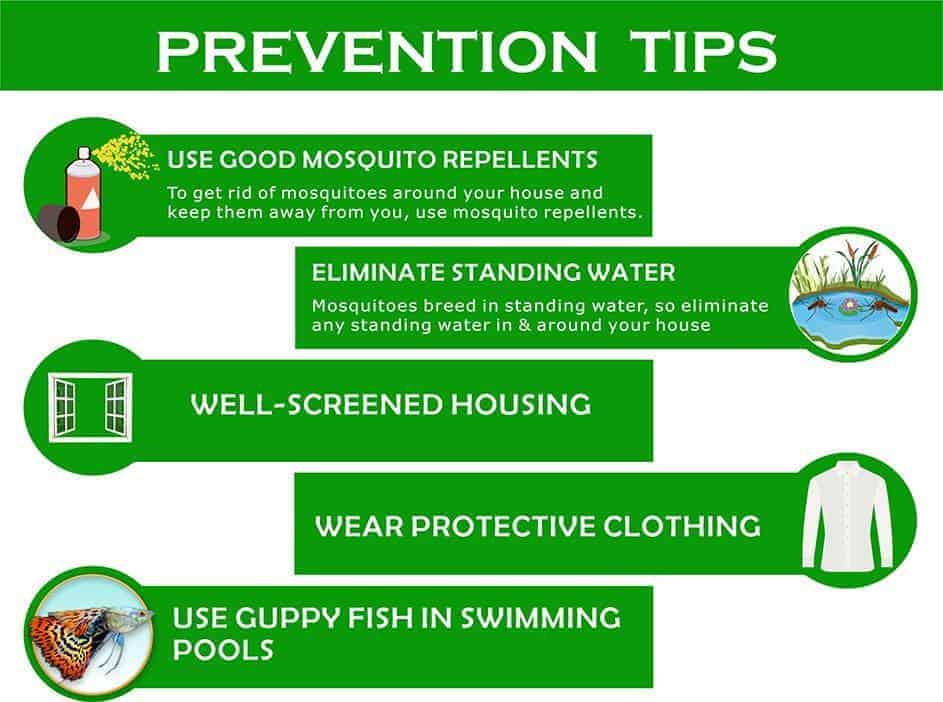 prevention tips for dengue