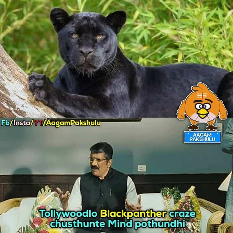 1. Panther Memes