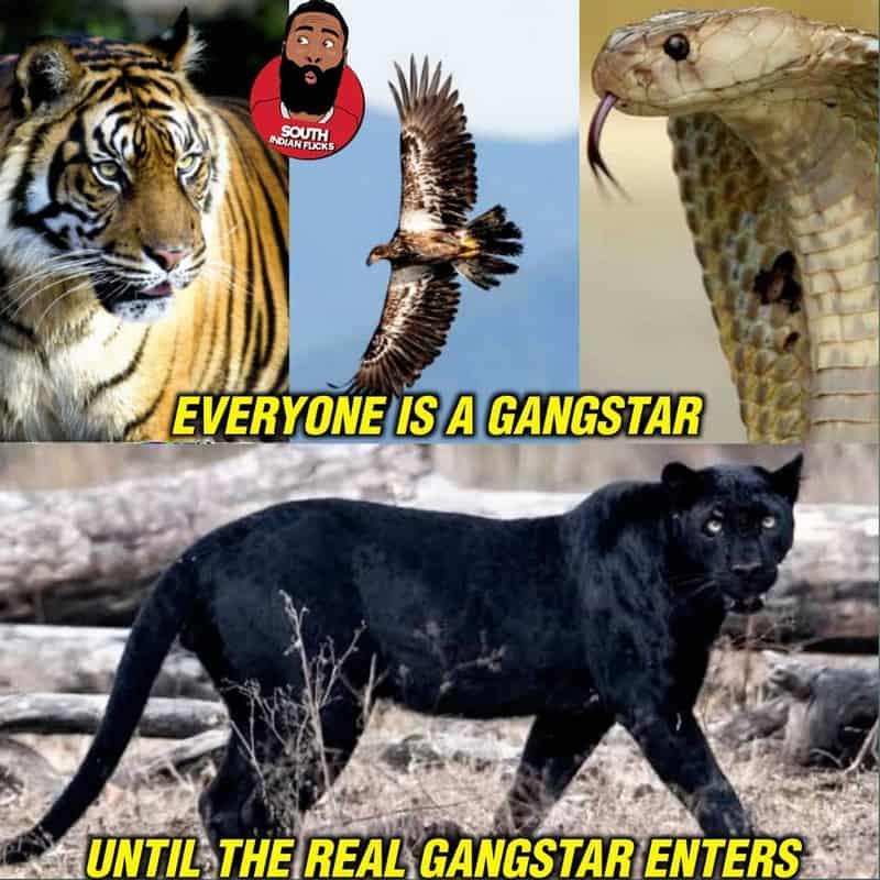 9. Panther Memes