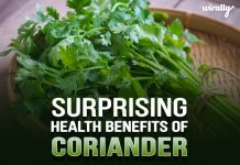 Coriander Web Article Thumbnail Recovered
