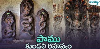 Pamu Kondali Rahasyam