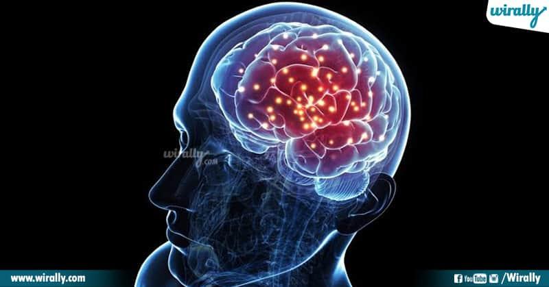 3 Brain