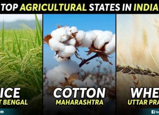 Top Agriculture States in India