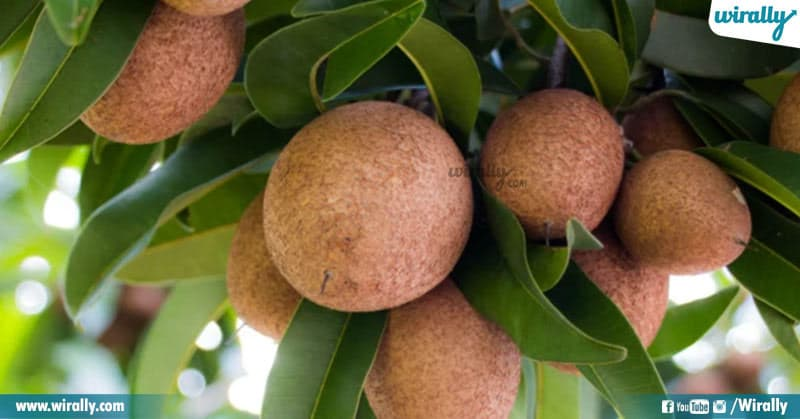 3 Rare Fruits Available In India