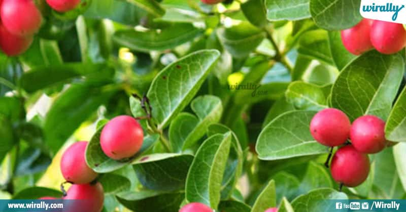 4 Rare Fruits Available In India