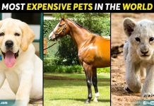 Most Expensive Pets In The World