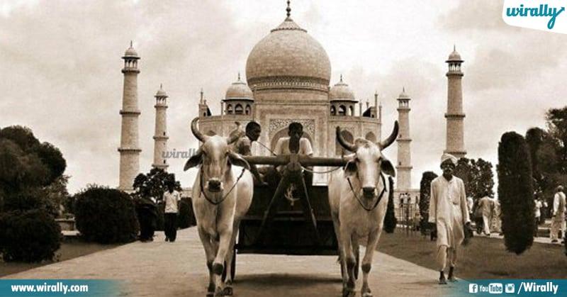 7 Taj Mahal