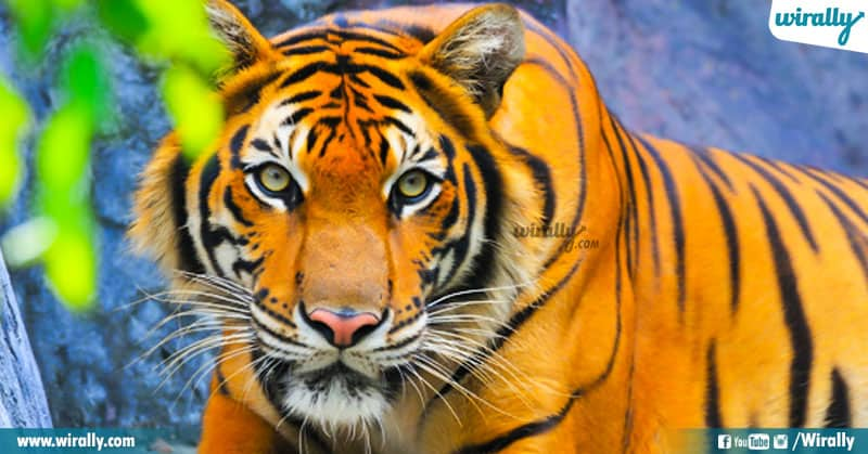 2 Hyderabad Nehru Zoo Park