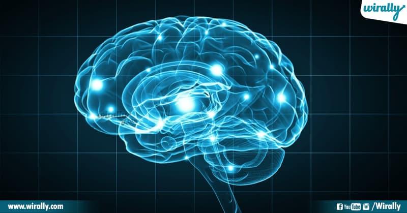 7 Brain