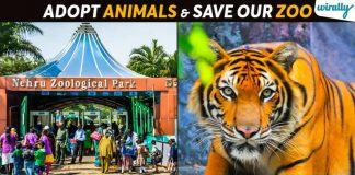 Hyderabad Nehru Zoo Park (1)