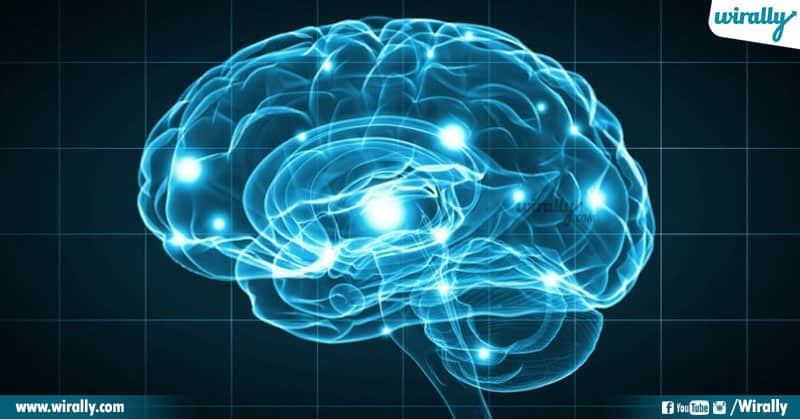 1 Unknown Facts About The Human Brain