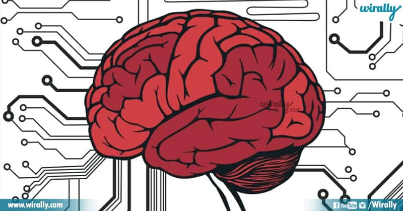 2 Unknown Facts About The Human Brain