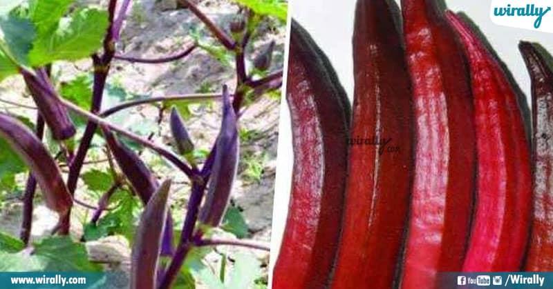 3 Red Bhindi
