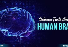 Unknown Facts About The Human Brain