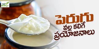 Health Benfits of Curd