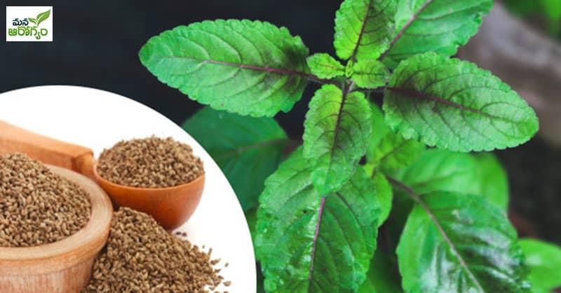Health Benfits of Tulasi
