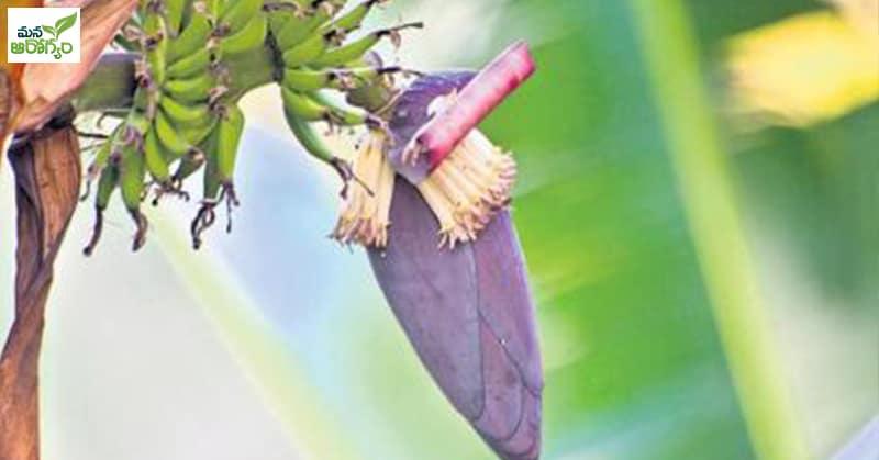 Health Benfits of Banana