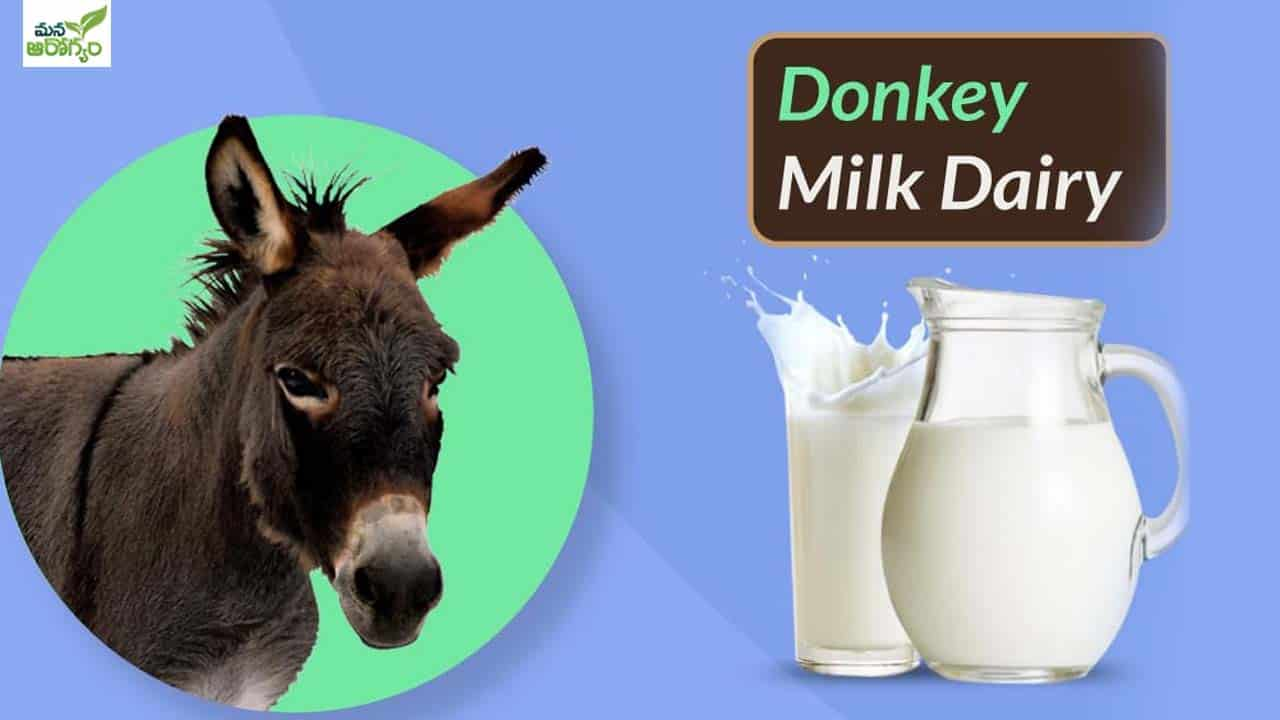 Health Benefits of donkey Milk