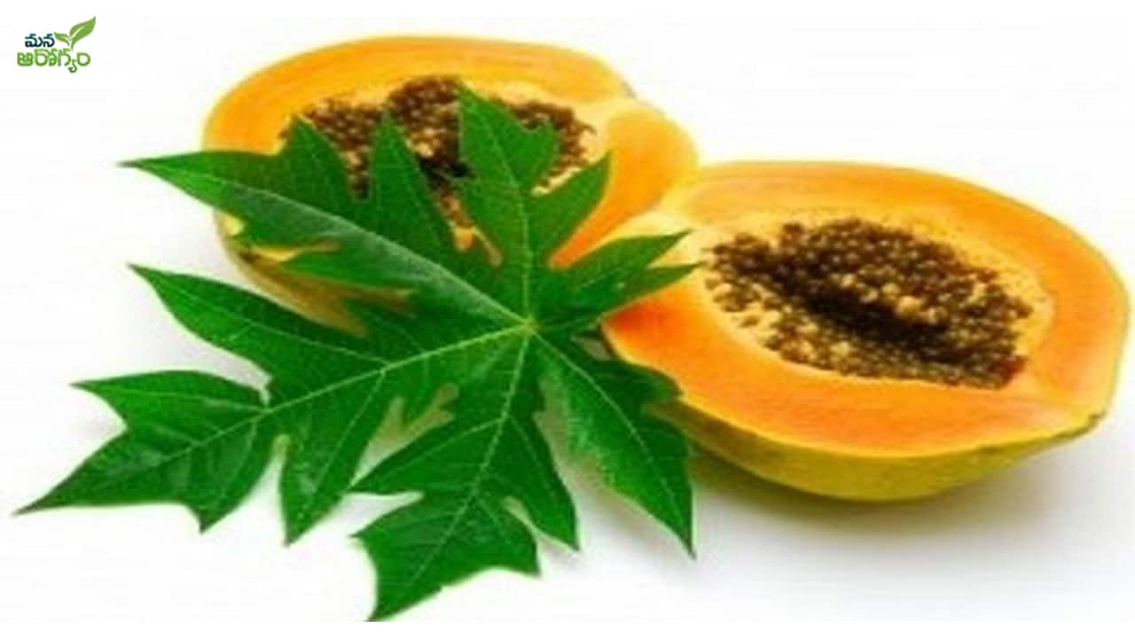 health benefits of papaya leaves