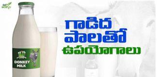 Health Benefits of donkey Milk