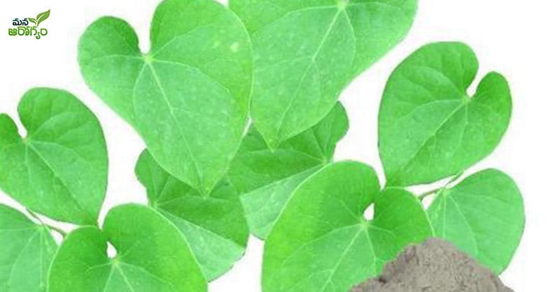 health benefits of Thippathiga