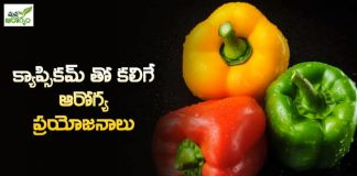 The amazing benefits of eating capsicum