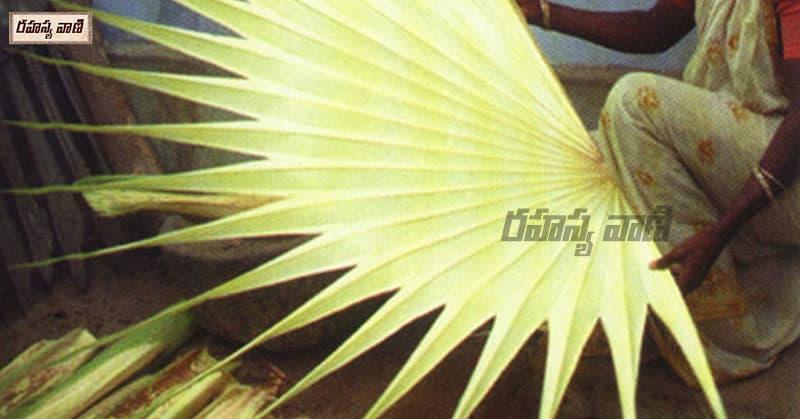 తాటాకు