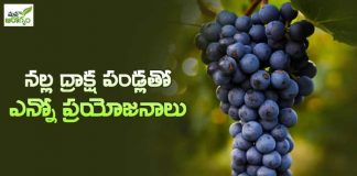 benefits with black grapes