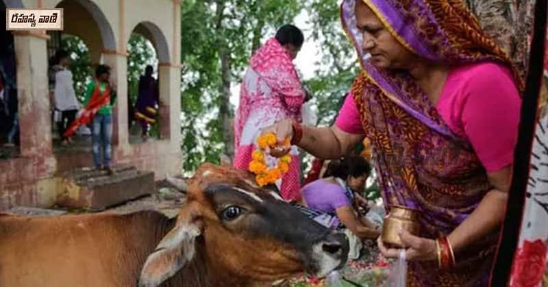 Interesting Facts About gomatha puja