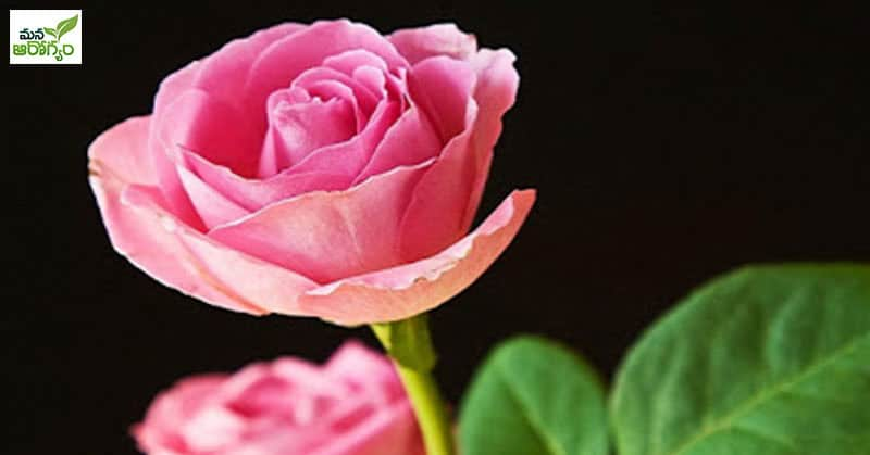 health benefits of roses