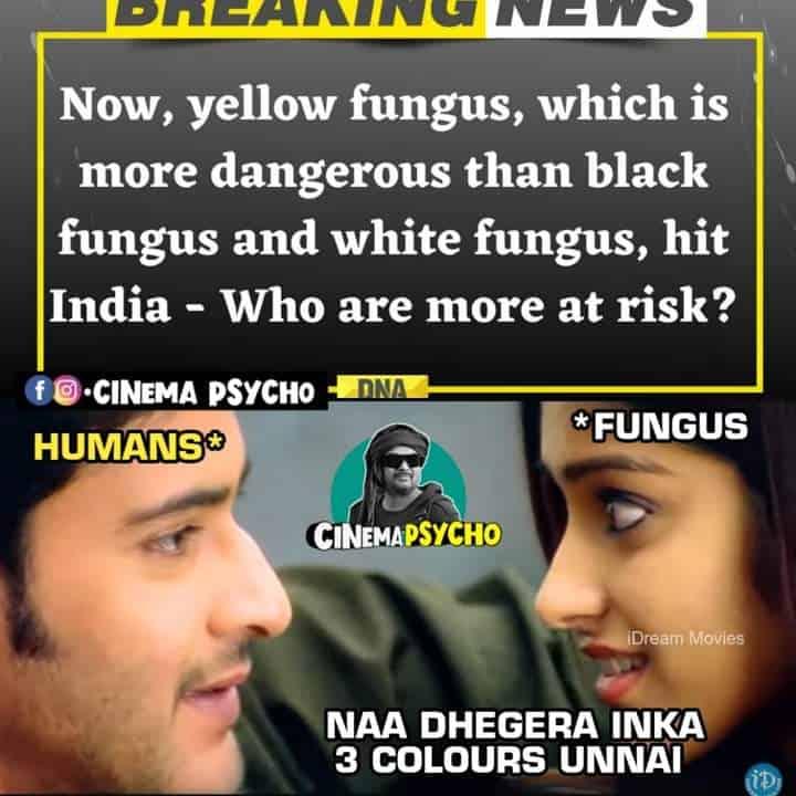 10.Yellow Fungus memes