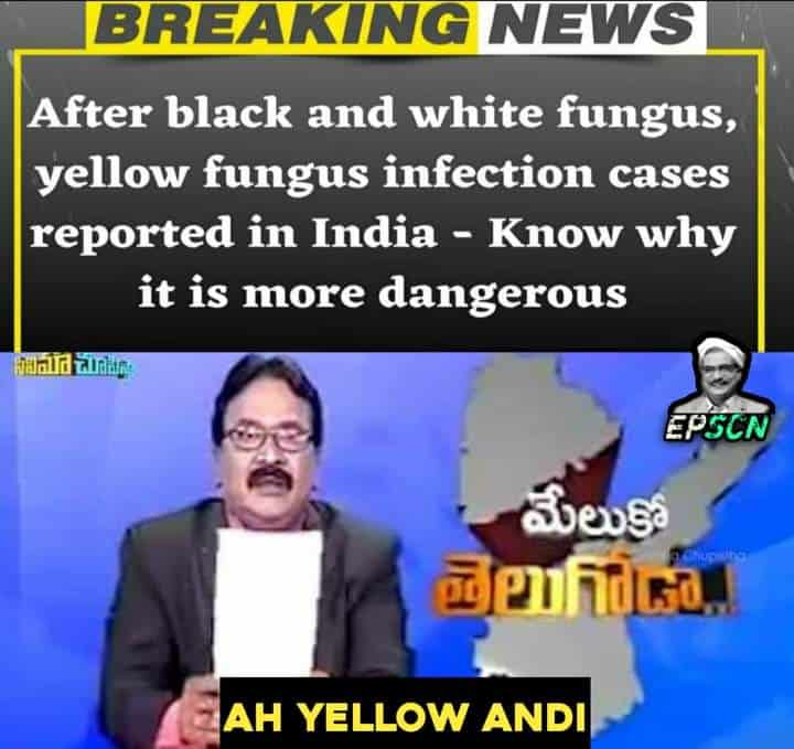 7.Yellow Fungus memes