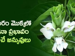 health benefits there are with addar plant