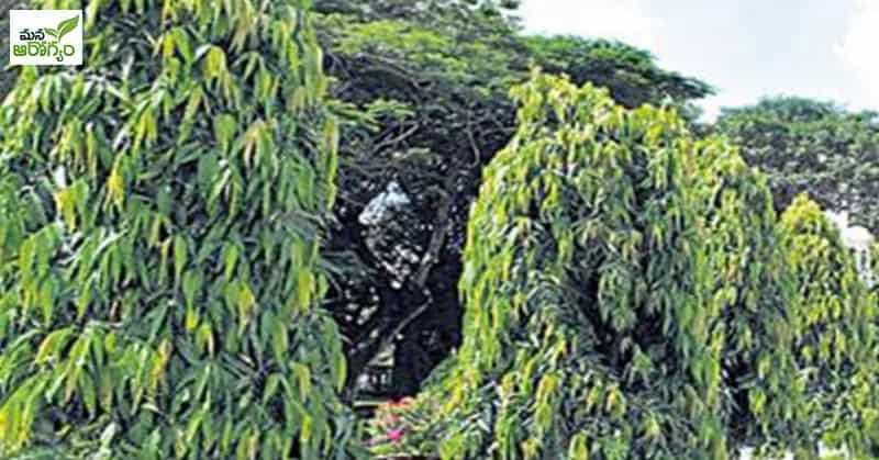2-Mana-Aarogyam-795